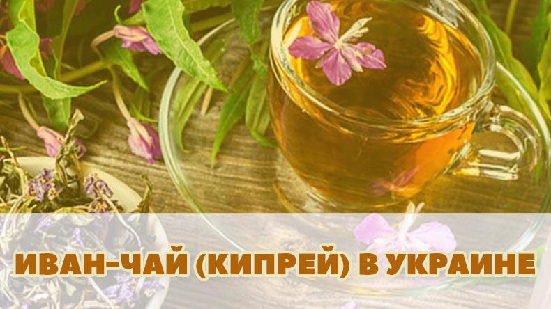 Купить ферментированный Иван-Чай (Кипрей) лучшие виды в Украине
