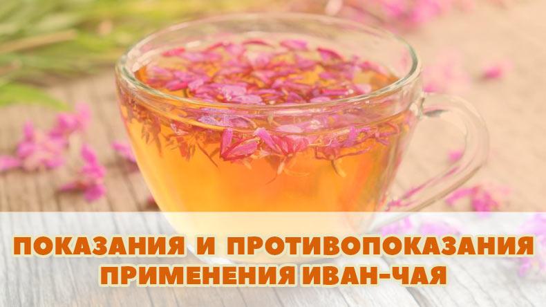 Показания и противопоказания применения Иван-чая