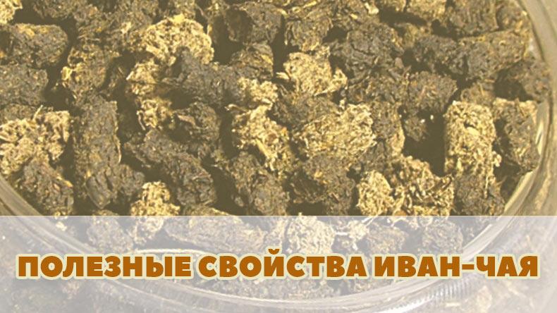 Полезные свойства Иван-чая (Кипрея) ферментированного для здоровья