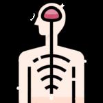 Восстановление нервной системы Иван-чай